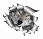 Ripped Torn Metal Design With Cute Wolf Wolves Face Eyes Motif External Vinyl Car Sticker 105x130mm